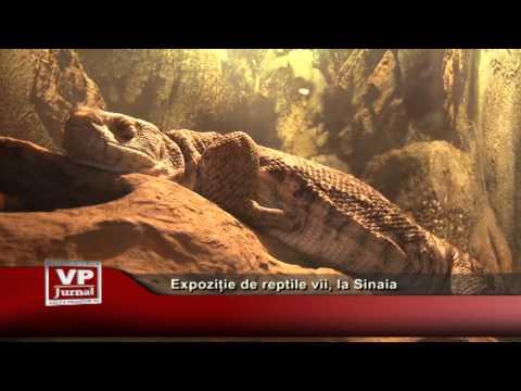 Expoziție de reptile vii, la Sinaia