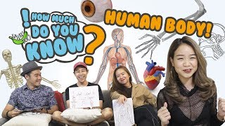 Video How Much Do You Know - Human Body MP3, 3GP, MP4, WEBM, AVI, FLV November 2018