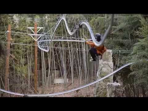 Woah! Would You Ride This Rollercoaster Zip-Line?