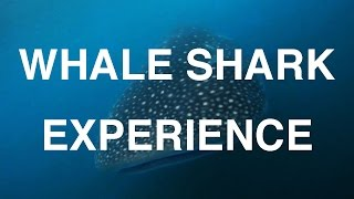 Donsol Philippines  City new picture : Whale Shark Experience - Donsol, Philippines