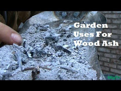 Garden tips - A very quick lesson on the benefits of wood ash. I will have longer videos coming soon, but my schedual is packed, so I am doing the best I can do! hang in t...
