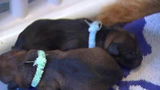 Cute Newborn Puppies Playing