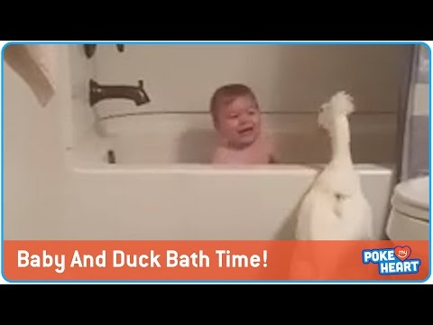 That is no Rubber Duckie! Real Duck wants to join Junior in the bath!
