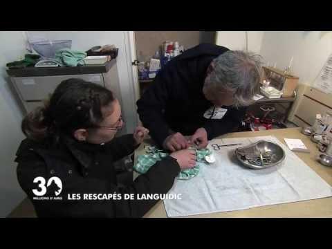 Les rescapés de Languidic (видео)