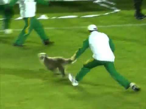 Invasão Canina no jogo entre Santa Fé e o Bota Fogo