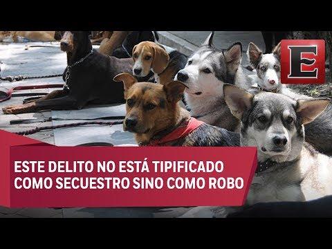 Ni las mascotas de la CDMX se salvan del secuestro