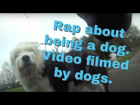 Dog Stars in Rap Video