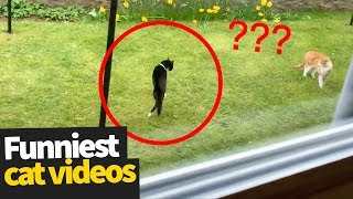 Video Hilarious Cat Viral Videos | Ultimate Cat Compilation 2019 MP3, 3GP, MP4, WEBM, AVI, FLV Agustus 2019
