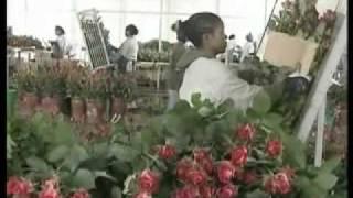 Ethiopian Horticulture Documentary Film  Russian Xvid