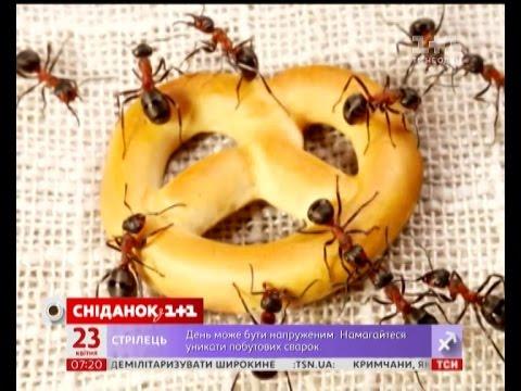 Як боротися з мурахами в домі