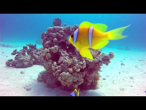 Underwater Wonders in Wadi Lahami