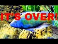 Download Lagu IT'S OVER - Beast Fish Part 2 - The Happy Ending Mp3 Free