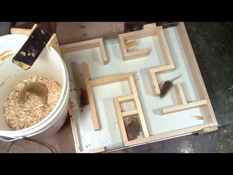 Mouse trap maze experiments (видео)