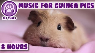 8 Hour Music Video for Guinea Pigs! Our Longest Video yet! Natural Stress and Anxiety Relief for Guinea Pigs. Pet Tunes are ...