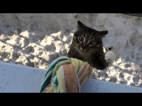 lancia l'asciugamano oltre il davanzale: il motivo vi stupirà!