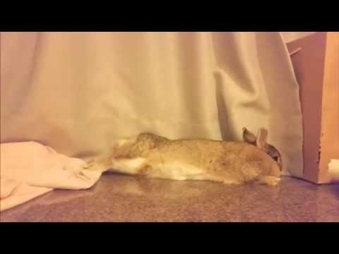 un coniglio che rotola, è un coniglio felice