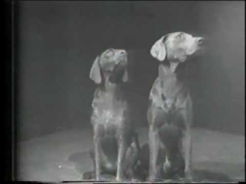 Collection: William Wegman Videos