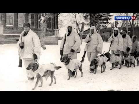 Собаки на войне. Выпуск 28.02.17