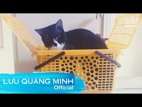 Funny cat videos - MY FUNNY CAT #10  LƯU QUANG MINH VLOG