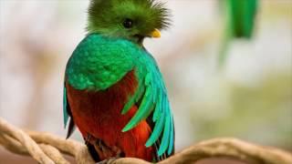 El Quetzal, epifanía de la libertad, en peligro de extinción