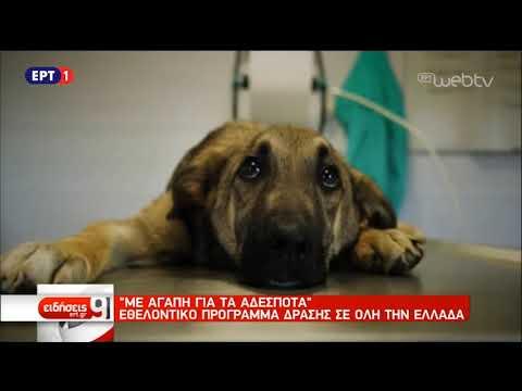 Αδέσποτα – Εθελοντικό πρόγραμμα δράσης σε όλη την Ελλάδα | 26/10/2018 | ΕΡΤ