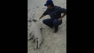 Mais uma tragédia na Baía de Sepetiba/One more tragedy in Sepetiba Bay