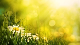 Morning Relaxing Music - Uplifting Feeling and Positive Energy full download video download mp3 download music download