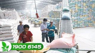 Nông nghiệp | Giải pháp đẩy mạnh xuất khẩu gạo nếp sang Trung Quốc