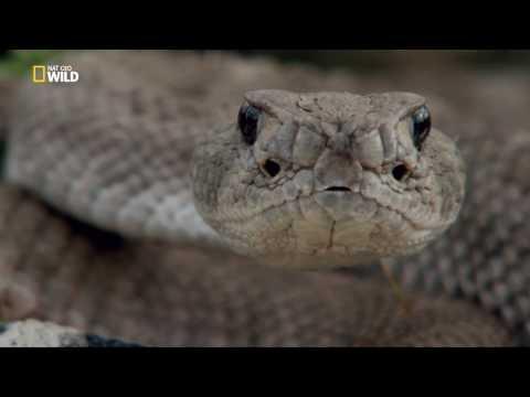Королевы гадюк / Viреr Quееns (2016 — НDТV 1080р) - DomaVideo.Ru