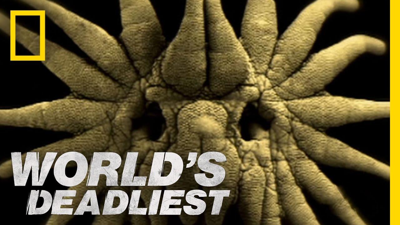 World's Deadliest – Is This the World's Weirdest-Looking Killer?