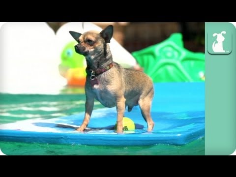 Super Slow-mo: Dogs' Day at the Pool – Dogs at Play