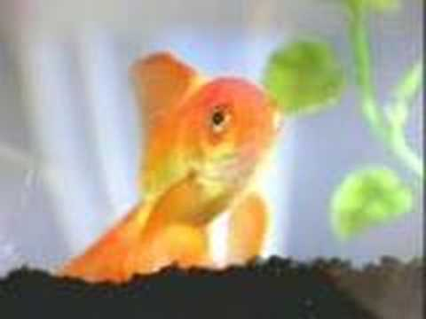 Importance of learning a second language Goldfish v. Kitty