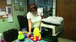 Dog Supplies - Dog Toys and Crates
