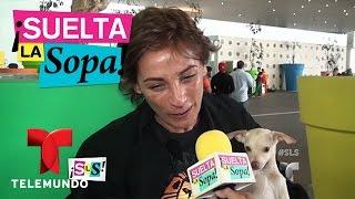 Video Suelta La Sopa | Consuelo Duval dice que Adal Ramones la exigió | Entretenimiento MP3, 3GP, MP4, WEBM, AVI, FLV Juli 2018