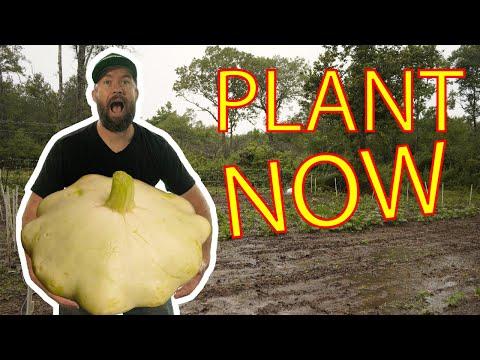 Plant THIS NOW! Last round of Summer Squash