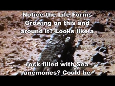 MARS ARTIFACTS FOUND?!? – Alien Sea Anemonies Ancient Ruins & Hieroglyphs