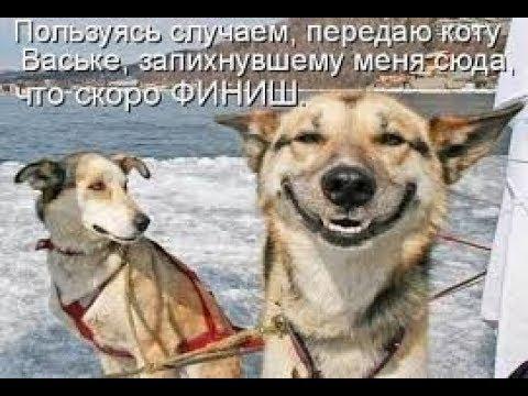 , title : 'Сборник Юмора Игорь Маменко'