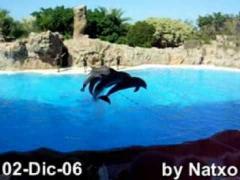 Dolphins Show de Delfines. (Loro parque) 2-Dic-06, (by Natxo)