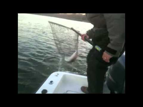 Lake Lanier Fishing Report on Lake Lanier  Ga Fishing Report   Current Fishing Conditions   Tips