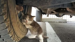 Guy Found A Terrified Stray Kitten Under A Truck, And He Just Knew He Had To Adopt Her by Did You Know Animals?