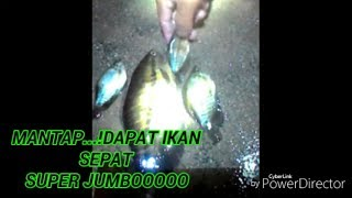 MANTAP...! ikan SEPAT LANGKA super JUMBOOOO.MANTAP...! ikan SEPAT LANGKA super JUMBOOOO.