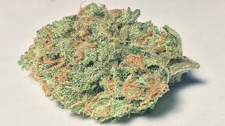 Peaches & Cream - (Strain Review) by Strain Central