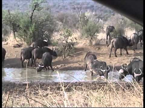 Pilanesberg Video No 5