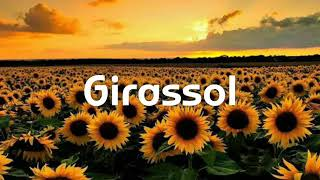 Whindersson Nunes - Girassol - (cover Gabriel Won) - Letra