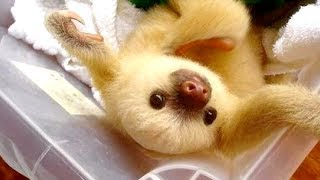 Video BABY ANIMAL videos are the HARDEST TRY NOT TO LAUGH challenge - WATCH and DIE LAUGHING MP3, 3GP, MP4, WEBM, AVI, FLV Maret 2018