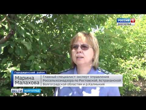 Об использовании в Волгоградской области феромонных ловушек в борьбе с насекомыми-вредителями