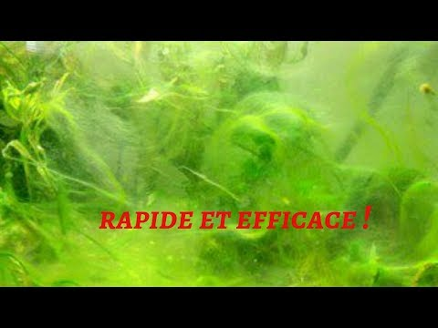 Se débarrasser des algues une bonne fois pour toute !