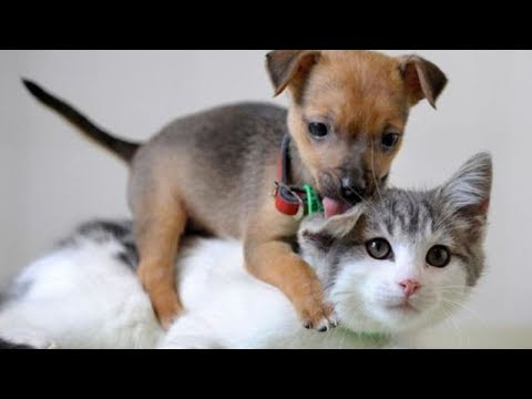 Cute quotes - Cats and Dogs will make your day easier after hard work! - Funny and Cute compilation