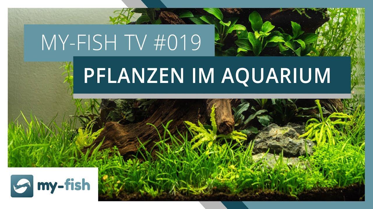 my-fish TV - Deine Nr. 1 Anlaufstelle für alle Themen rund um die Aquaristik 45