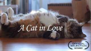 A cat In Love